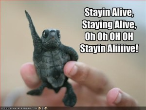 BrousBlog11a Turtle Stayin' Alive