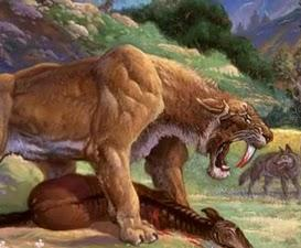Saber Tooth Tiger crop