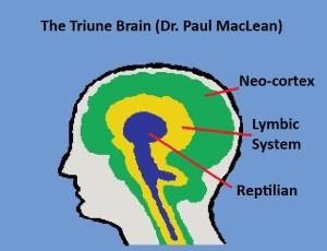 Triune Brain1 McClean