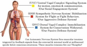 Polyvagal Anatomy Diagram