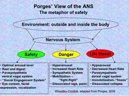 Polyvagal Autonomic Nervous System