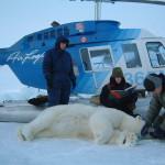 polar_bear_biologist_usfws_helicopter